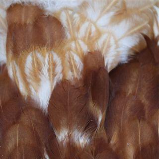 Faith feathers