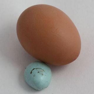 Eggshell3