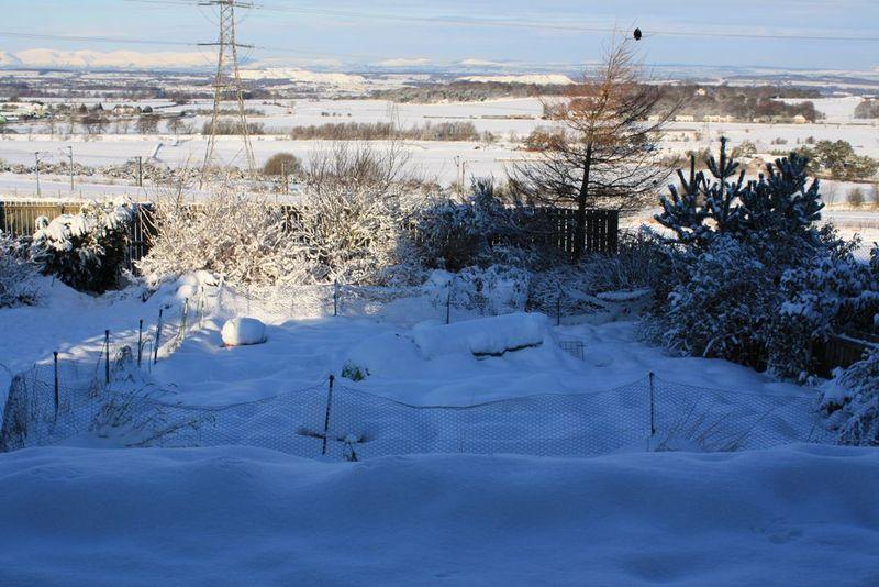 Snowy eglu